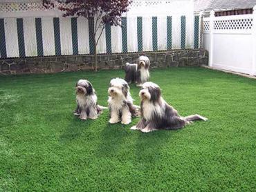 Artificial Grass Photos: Artificial Grass Hudson, Texas Landscape Design, Beautiful Backyards