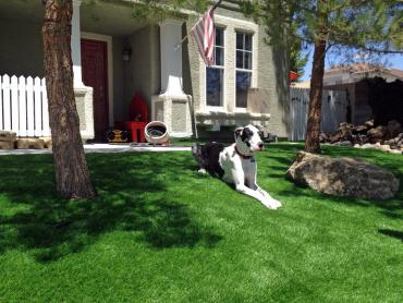 Artificial Grass Photos: Artificial Grass Installation Leona, Texas Lawn And Landscape, Dogs Park