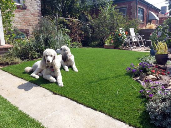 Artificial Grass Photos: Fake Turf Thompsons, Texas Pet Paradise, Landscaping Ideas For Front Yard