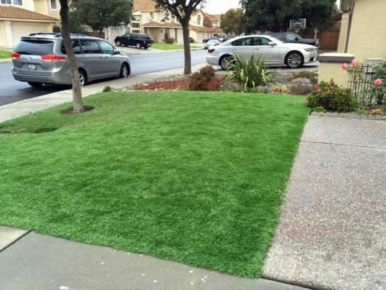 Artificial Grass Photos: Grass Turf Trinity, Texas Home And Garden, Front Yard Ideas