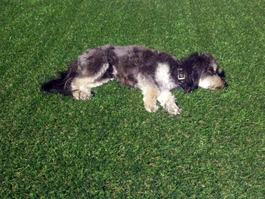Artificial Grass Photos: How To Install Artificial Grass Louise, Texas Drainage, Dogs