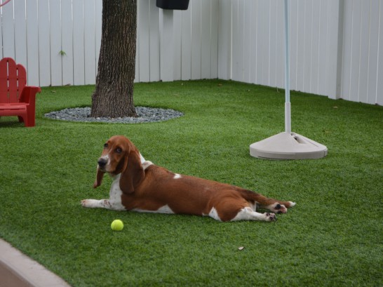 Artificial Grass Photos: Lawn Services Onion Creek, Texas Dog Park, Grass for Dogs