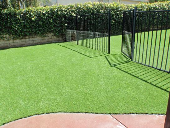 Artificial Grass Photos: Plastic Grass Smithville, Texas Pet Turf, Front Yard