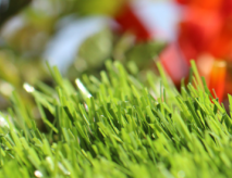 Synthetic Grass Wholesale
